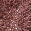 Dailus Nude 19 Lutei, Venci - Batom Líquido 4ml