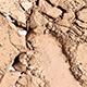 Sombra Refil Acetinada Brancareia
