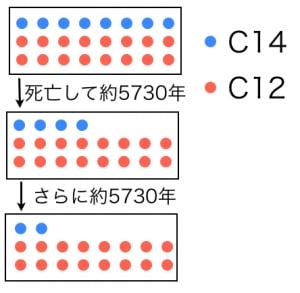 C14年代測定法