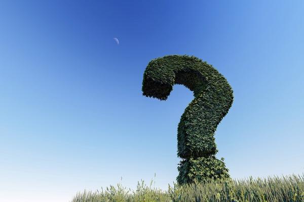 ?の形の草