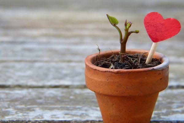鉢植えからハート