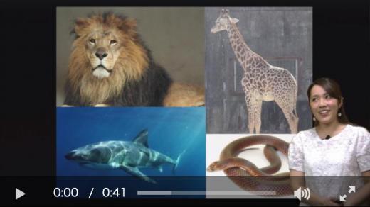 スクールTVドリルのAL動画の画像