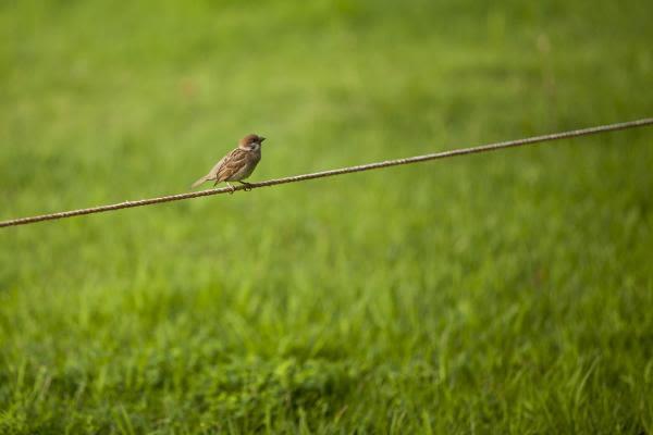 1⃣羽のすずめ