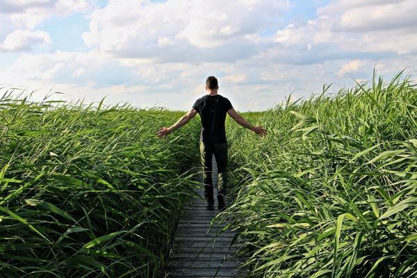 畑を歩く男性