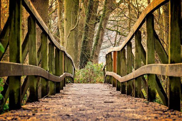 森の中にかかる橋
