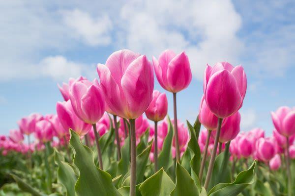 花畑のイメージ
