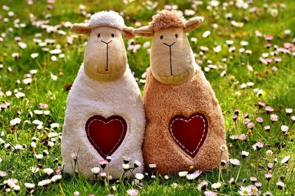 羊二匹の画像