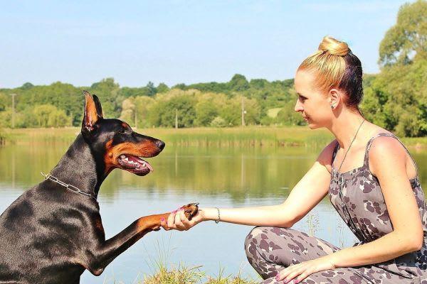 犬と握手している画像