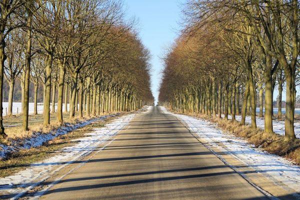 よく晴れた並木道