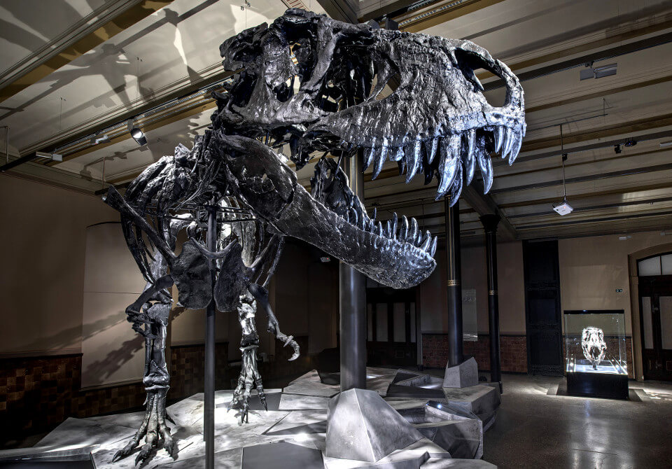 Museum of Natural History Berlin Dinosaur Skeleton Tristan