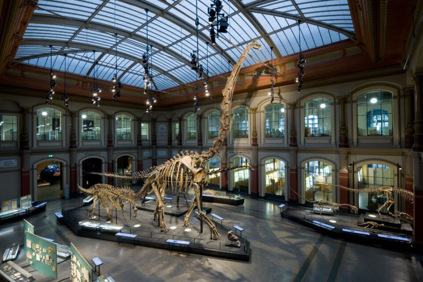 Natural History Museum in Berlin: Highlights, Price, Info