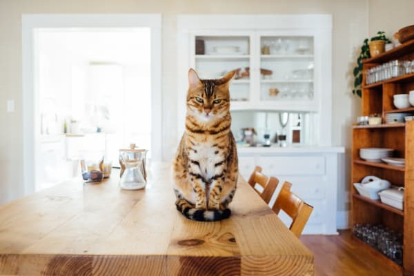 A cat who has been left an estate in a will