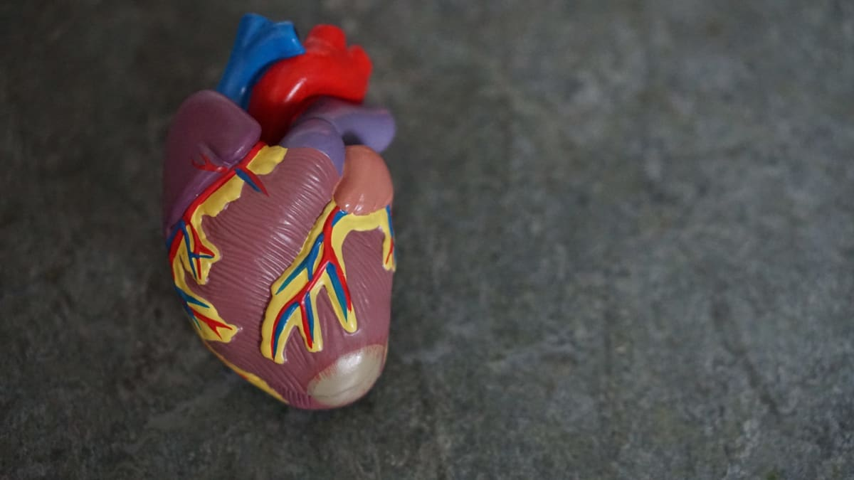 What happens to your body when you die - human heart