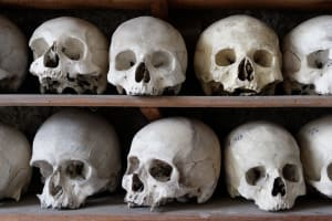 Skulls on shelves