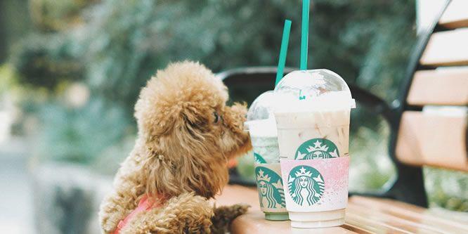 Nestlé übernimmt Anteile von Starbucks