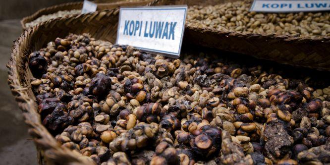Kaffee in Thailand: Ein Überblick für Urlauber