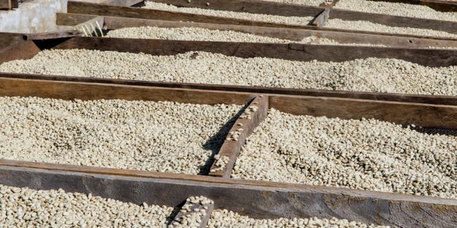 Die Qualität von Rohkaffee