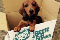 Bierista brewdog.001