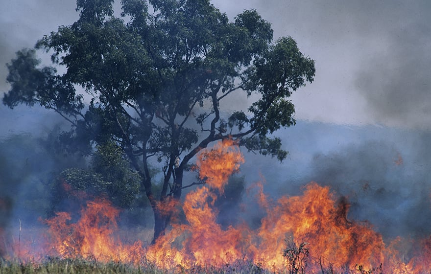 Image: Bush fires in Australia devasted homes and buildings (Photographerlondon/Dreamstime.com)