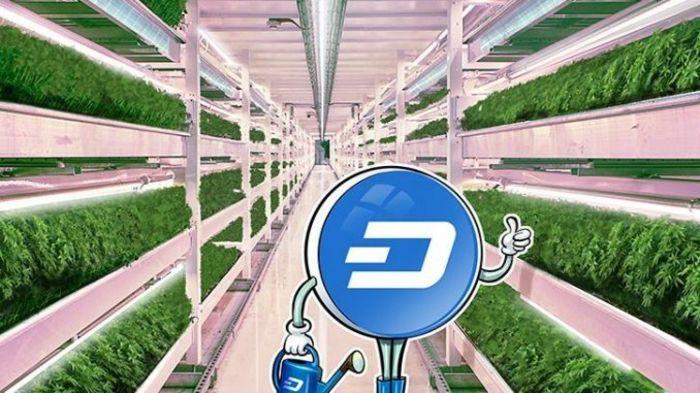 Dash теперь можно использовать в 13 000 розничных точках Бразилии