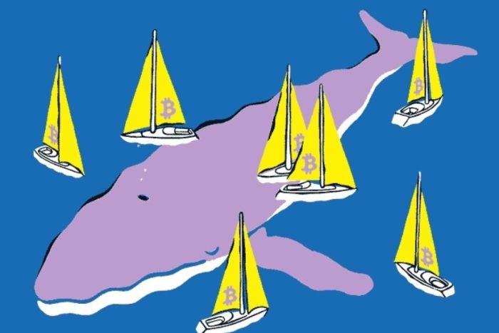 Биткойн-киты скупают монеты при снижении курса