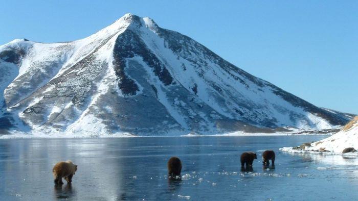 Камчатка будет токенизировать китов и вулканы