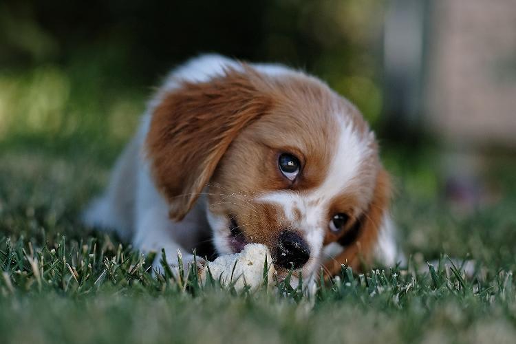 Empresa à venda em Gaspar/SC | Oportunidade para Produzir Petiscos para Pets | Foto 1