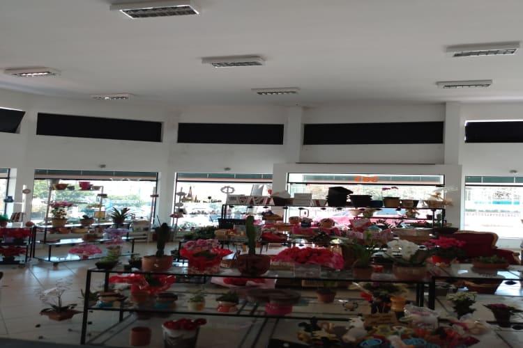 Empresa à venda em Vinhedo/SP | Floricultura em Vinhedo | Foto 1