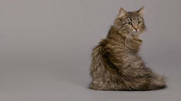 קריאייטיב בינל: תמיד רציתם להבין את החתול? הכירו את הקולר שמתרגם את המיאו