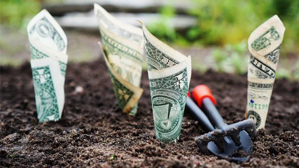 צמיחה, צילום: Pixabay