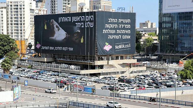 הפתעה לשבועות: שלט חוצות ענק באיילון נגד תעשיית החלב