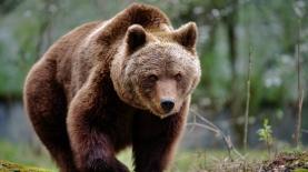 שוק דובי, צילום: Istock