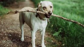 DOG, צילום: Depositphotos