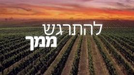 יקב רמת הגולן, צילום: יחסי ציבור