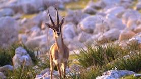 החברה להגנת הטבע, צילום: צילום מסך