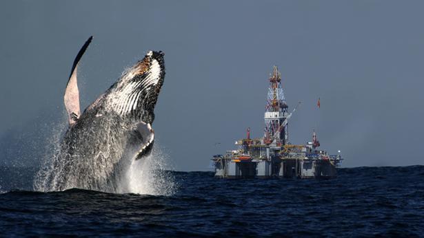 אסדת לוויתן, צילום: Getty images Israel