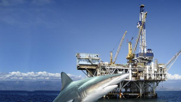 כריש, צילום: Getty images Israel