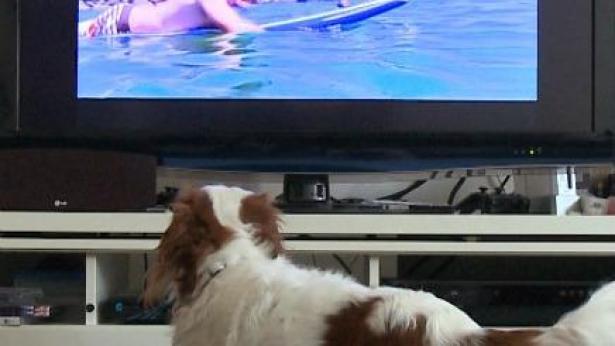 הטלוויזיה ירדה על ארבע: yes תעלה ערוץ שאינו מיועד לבני אדם - DOGTV