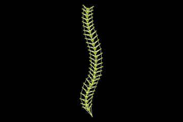 Tensegrity model spine