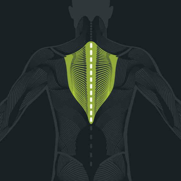 Anatomie de la colonne thoracique