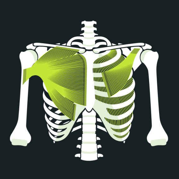 Anatomie Brustkorb Brustschmerzen