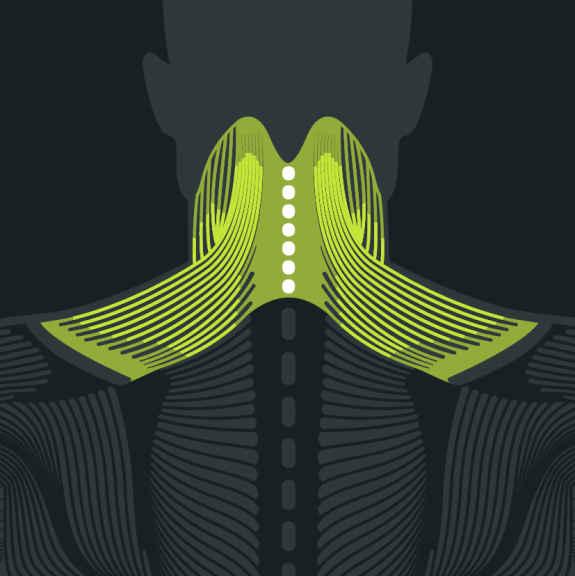 Anatomie Nacken bei Nackenschmerzen