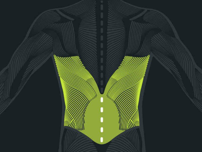 Anatomie des Rückens