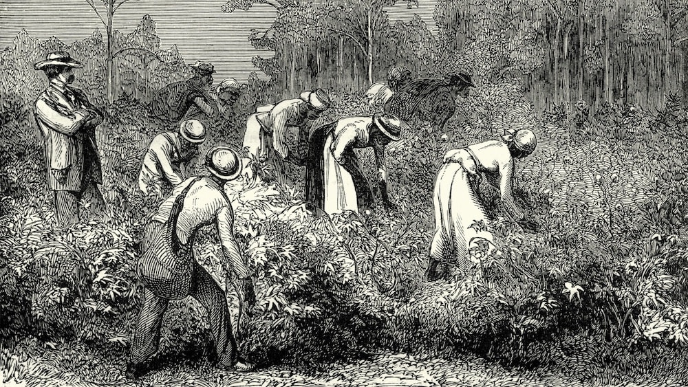 Why We Need A Serious Reeducation On Slavery - Blavity