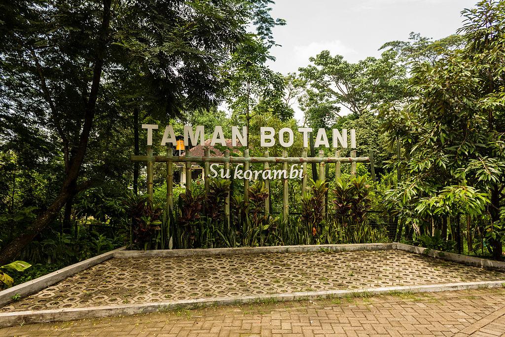 Pesona taman botani sukorambi jember sarana rekreasi edukatif