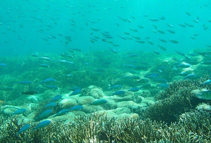 Gili Petagan Lombok
