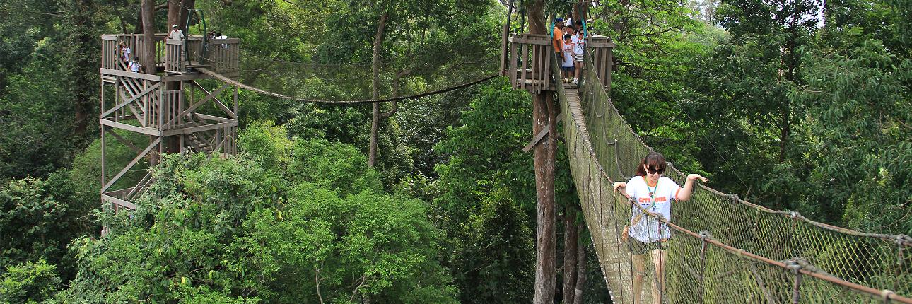 Tempat wisata Bukit Bangkirai Kalimantan