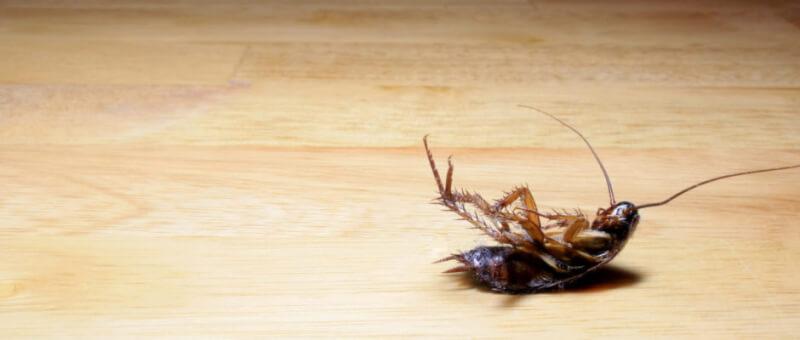 Penyebab Rumah Banyak Kecoa dan Rayap