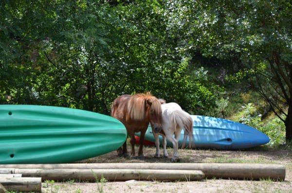 eyrieux-canoe-poney