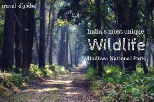 cover for The mesmerizing experience at Dudhwa National Park